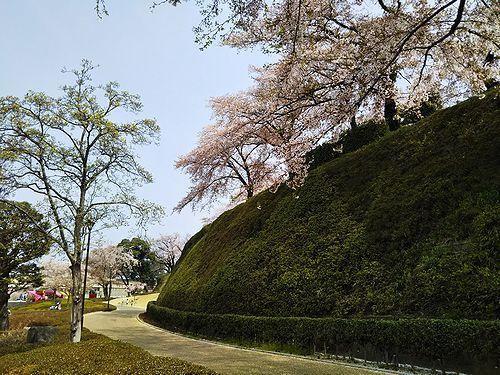 20180403群馬県前橋公園の桜9