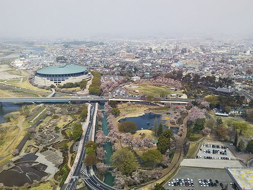 20180403群馬県前橋公園の桜12