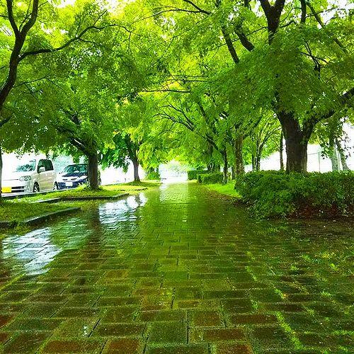 20180530長野県軽井沢町、新緑輝く雨の軽井沢