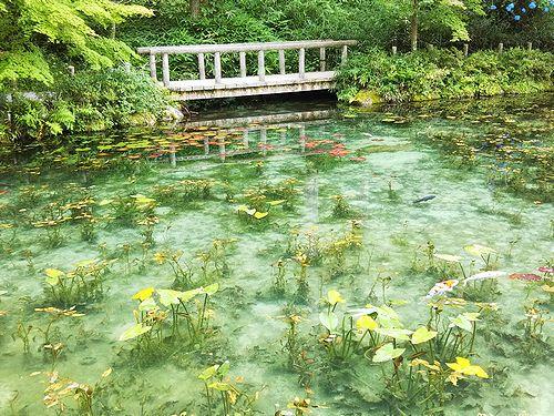 20180626岐阜県関市モネの池 (3)