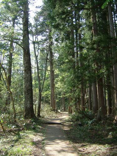 2006.5.長野県長野市、戸隠森林植物園