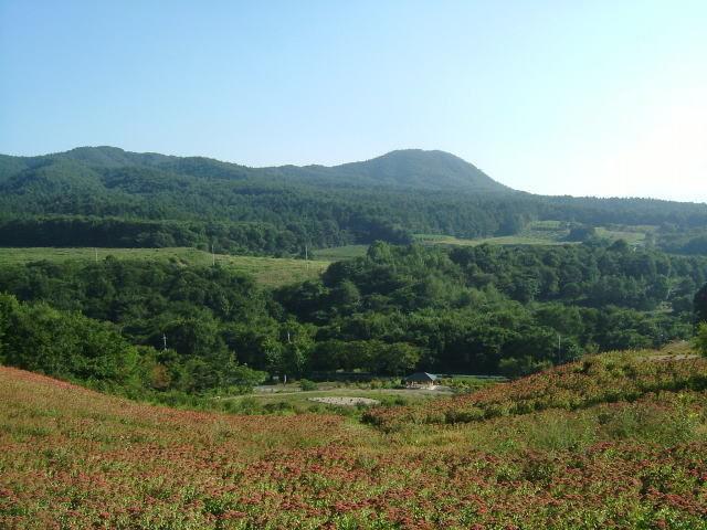2008.9.群馬県六合村、暮坂高原の花楽の里のオランダセダム