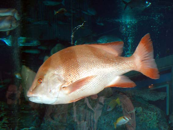 鳥羽水族館の魚