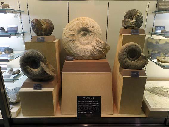 志摩マリンランドのアンモナイト化石