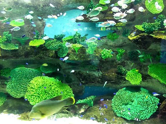志摩マリンランドのサンゴ礁水槽