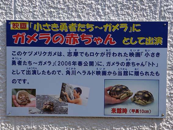 映画に出演したケヅメリクガメ