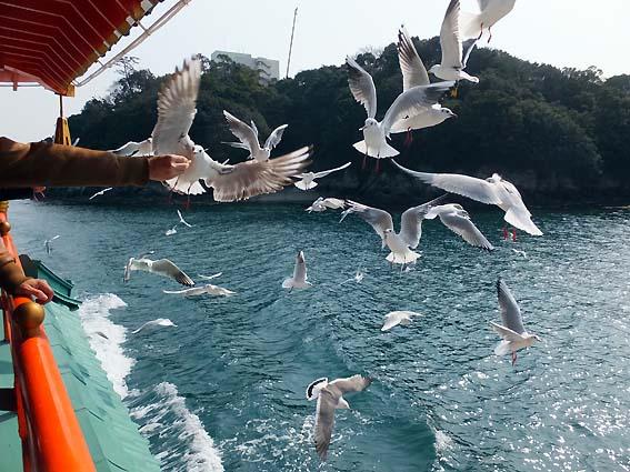 クルージング船に群がるカモメ