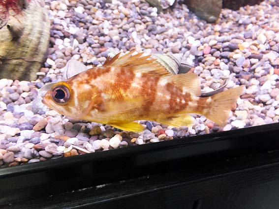 アクアマリンの魚たち
