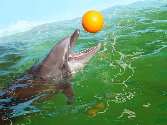 「イルカ島」のイルカ