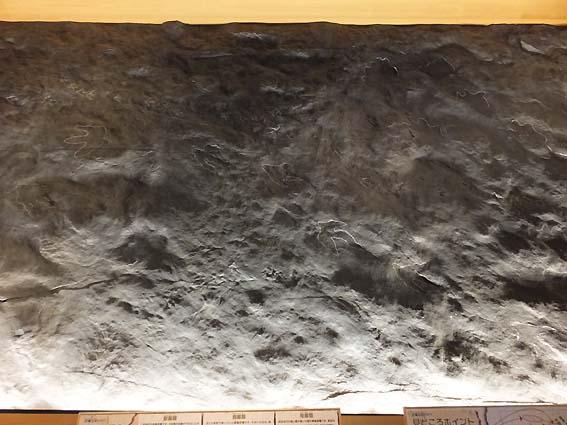 恐竜類の足跡化石のレプリカ(富山市科学博物館)