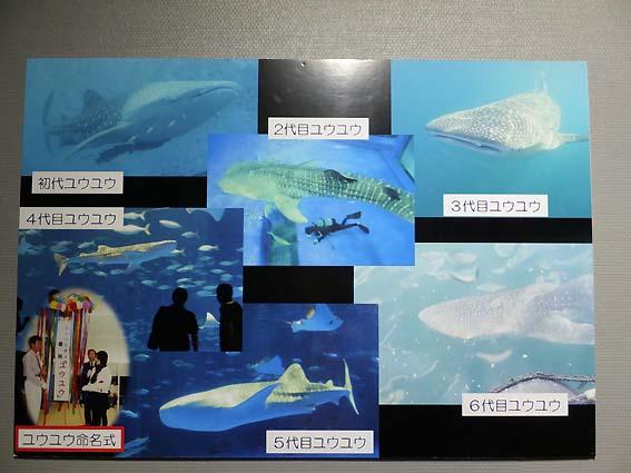 かごしま水族館の歴代ユウユウ