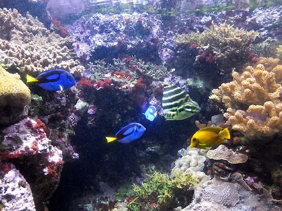 かごしま水族館の海水魚水槽