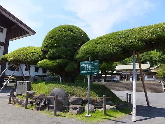 照國神社の「斉鶴」