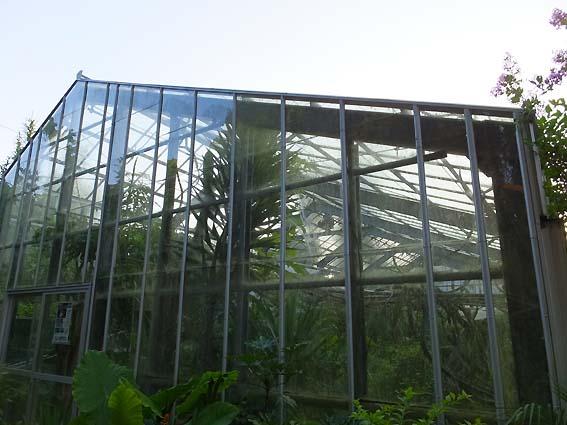 指宿フェニックスホテルの温室