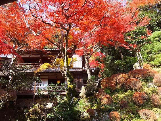 浄土苑の紅葉