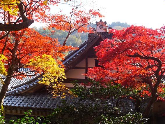 上書院一階から見た紅葉