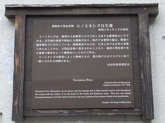 ユノミネシダ説明板
