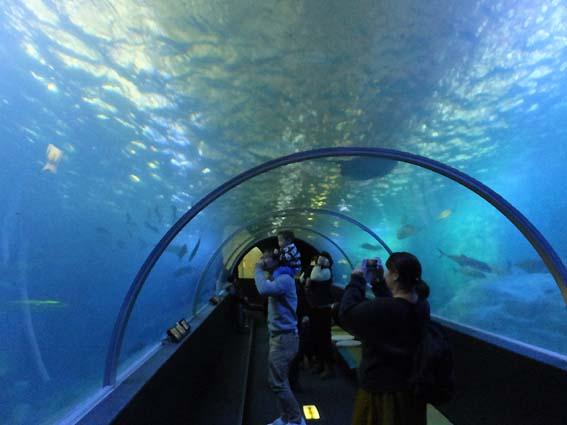 串本海中公園水族館の水中トンネル