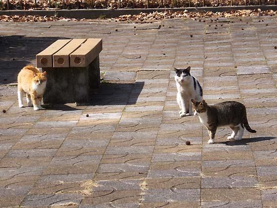 荒山公園の猫たち