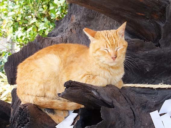 古木に座る猫ちゃん
