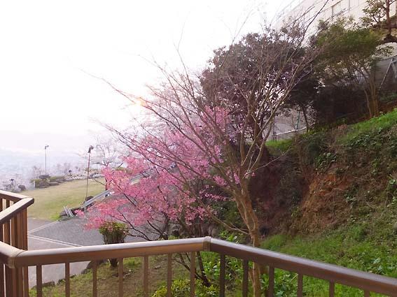矢太樓の部屋からの景色