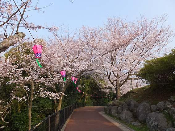 風頭公園の桜