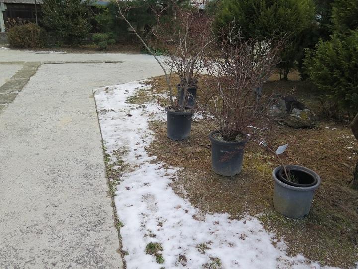 ブルーベリーと日影の雪