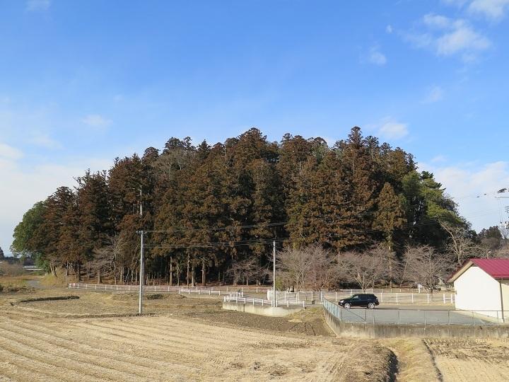 午後の田村神社の森