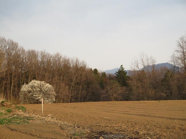 梅と里山と宇津峰