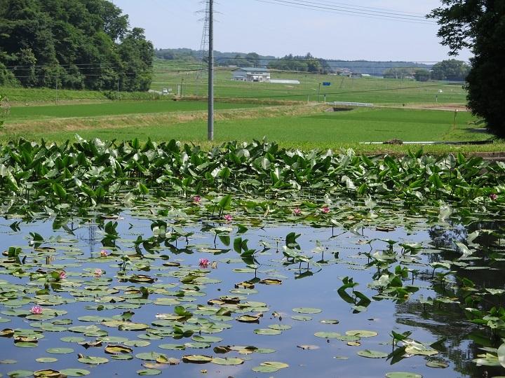 池の向こうの田園風景