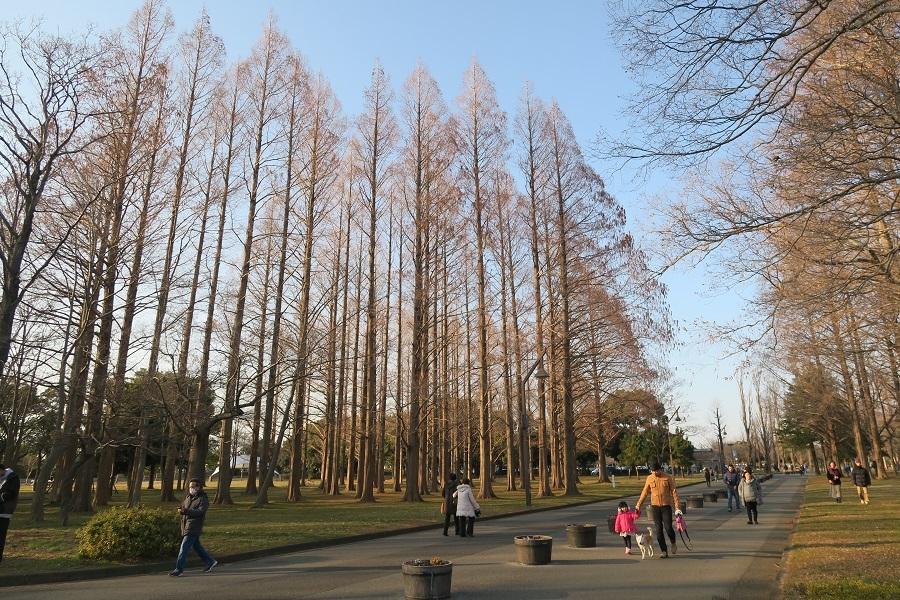水元公園②