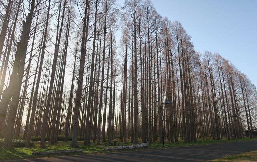水元公園⑦