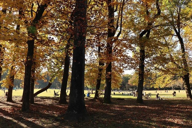 小金井公園11月1