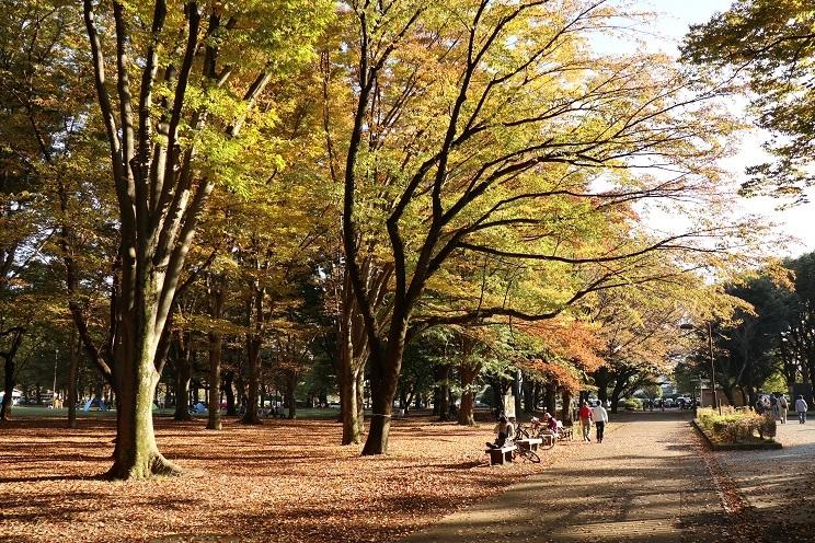 小金井公園11月3