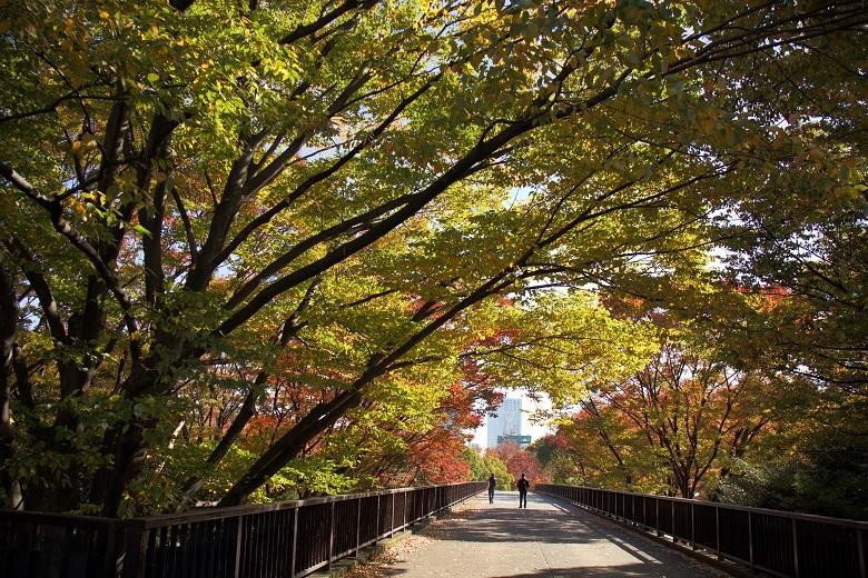 代々木公園4