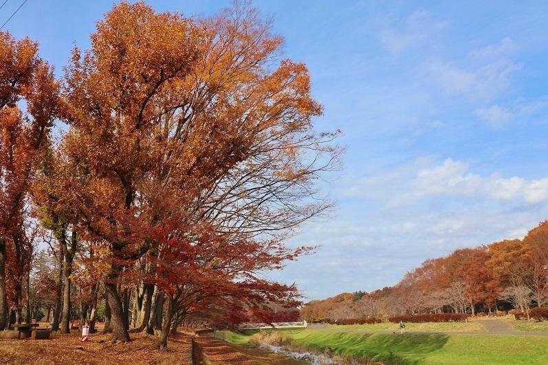 武蔵野公園1