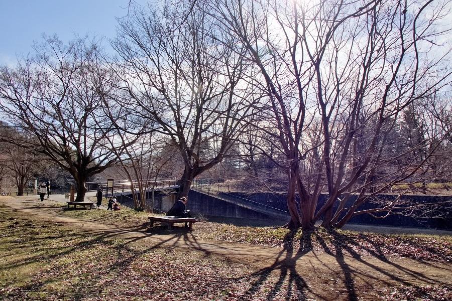 野川公園201803