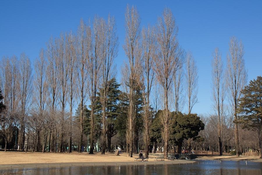彩の森公園20180202