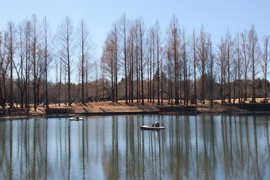 彩の森公園20180203