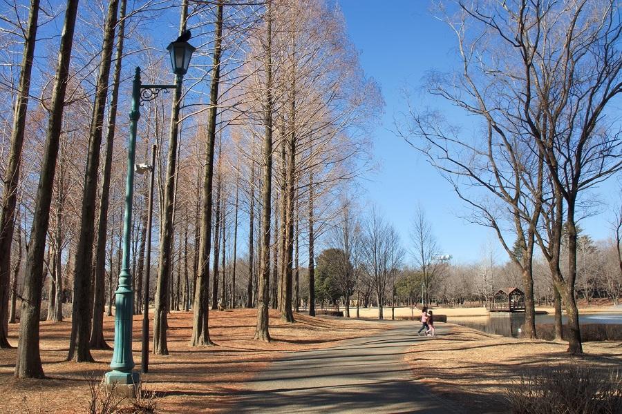 彩の森公園20180205