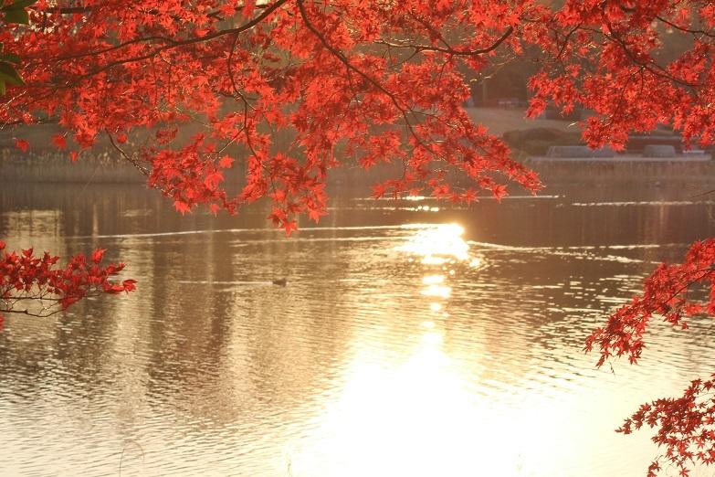 昭和公園11月①