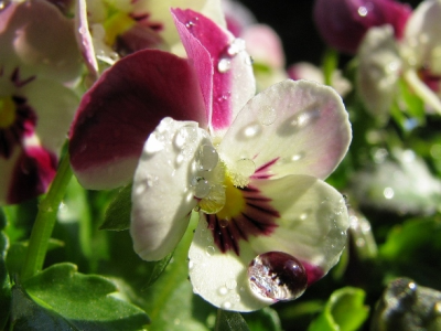 雨上がりの花01