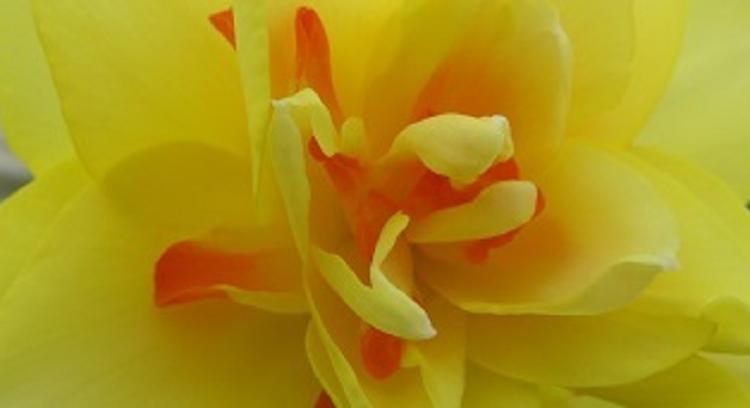 花蘂003