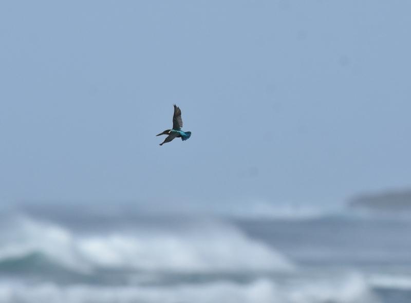 171022kingfisher1.jpg