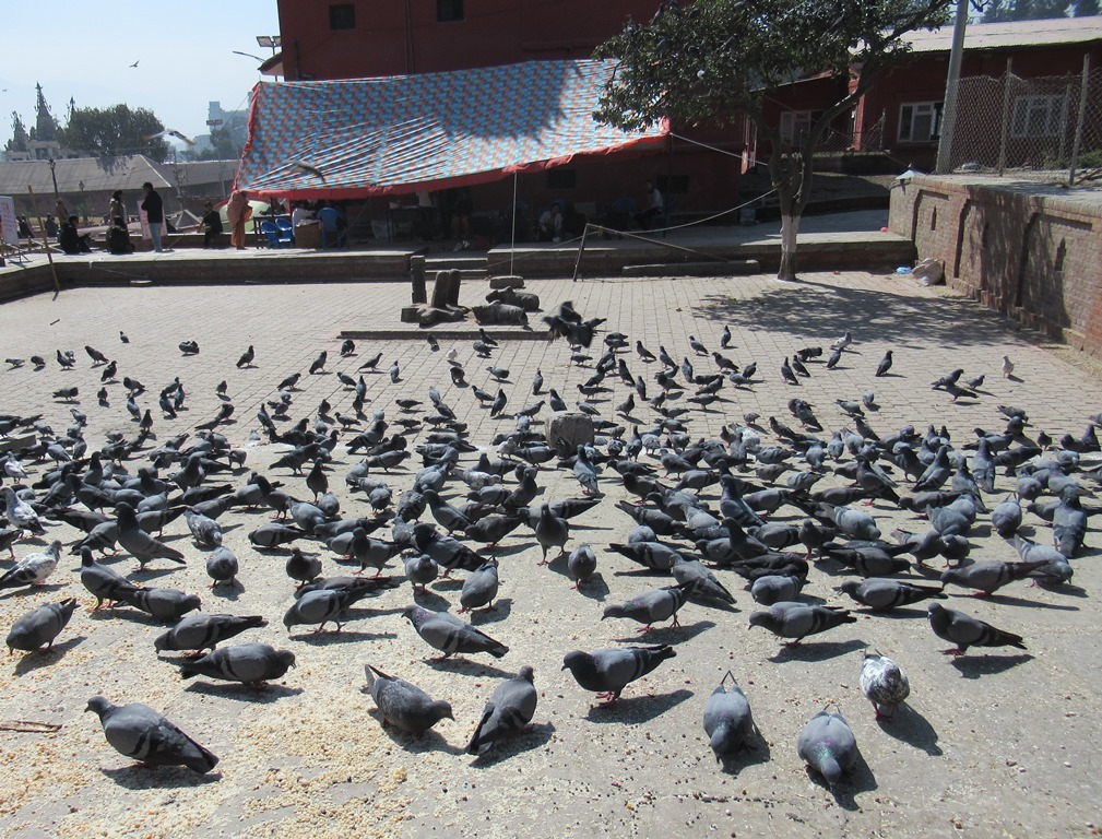 180210kathmandu10.jpg