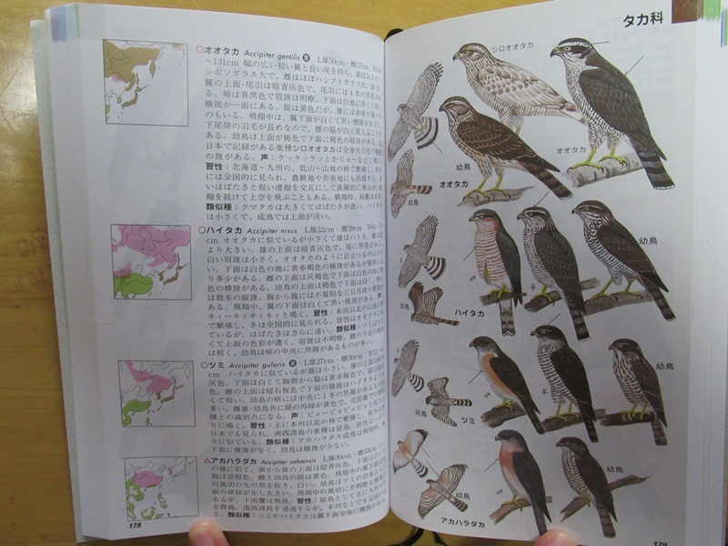 FG日本の野鳥29