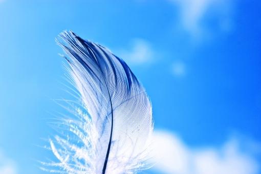 白羽扇イメージ