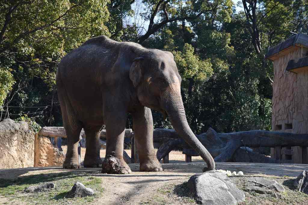 冬の天王寺動物園は空いていてよかったですよ6