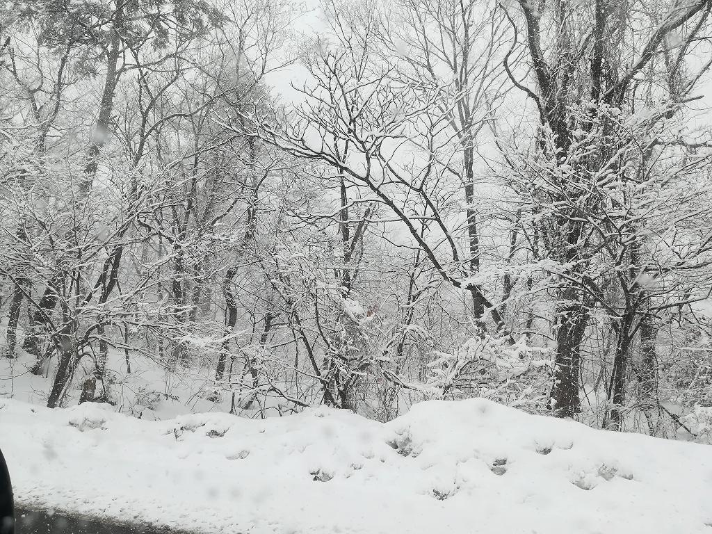 アップかんなべに行ったら豪雪に見舞われた1