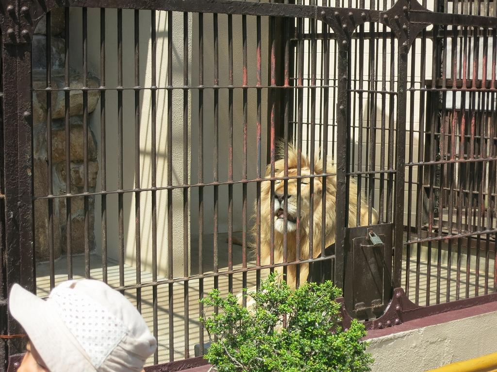岡山 池田動物園は良いところでした5